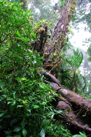 Rainforest plants, Monteverde National Park, Costa Rica photo