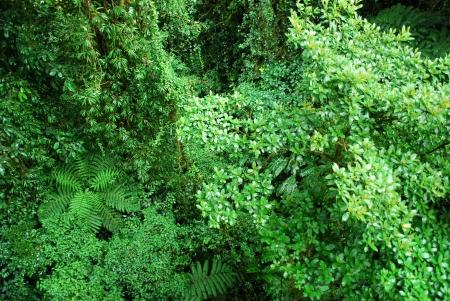 пышной листвой: Тропический лес пышной листвой
