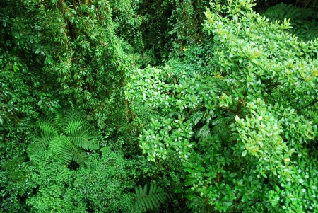 Rainforest lush foliage