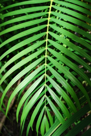 Green palm tree leaf background, Costa Rica