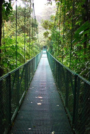 Suspension bridges in cloud forest photo