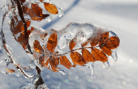 Leaf covered by ice after freezing rain Stock Photo