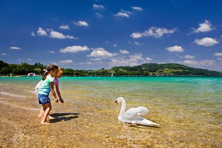 Swan in the beautiful turquoise waters of the Lac du Paladru in France.