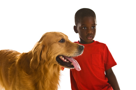 trained: A small African American boy with a beautiful golden retriever dogs.
