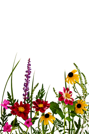 Bright Summer flowers and plants isolated on a white background.