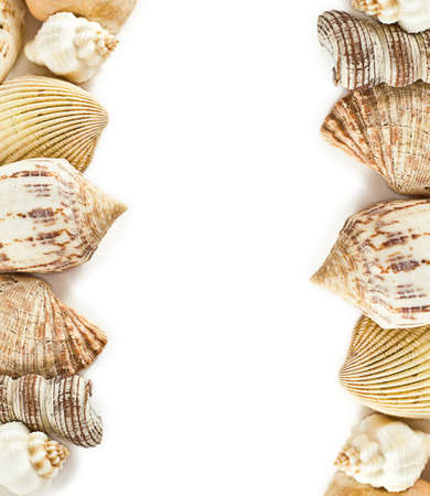 Frame with different shells on white background