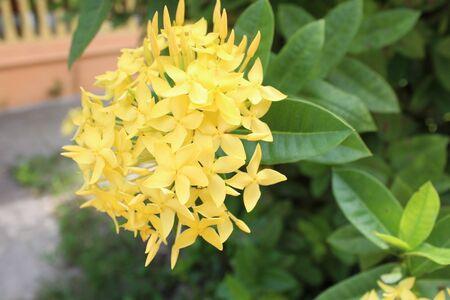 spike: flower spike Stock Photo