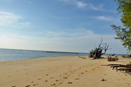 extensive marine:  Phuket Beach
