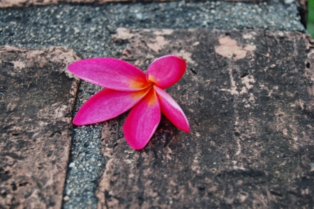 Flower on the floor photo