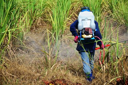 Farmer spraying herbicide on Sugarcane Field