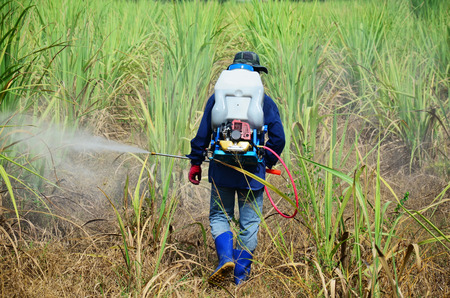 Farmer spraying herbicide on Sugarcane Field photo