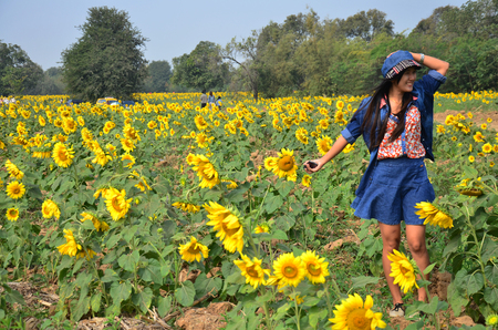 Women Thai Portrait on Sunflower Field at Saraburi Thailand photo