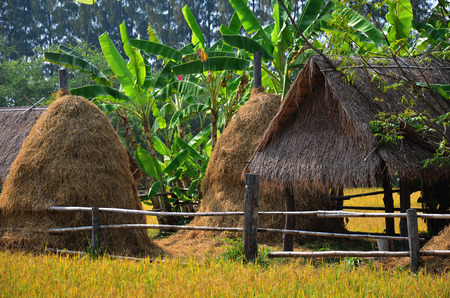 Rice field and straw hut at Thailand photo