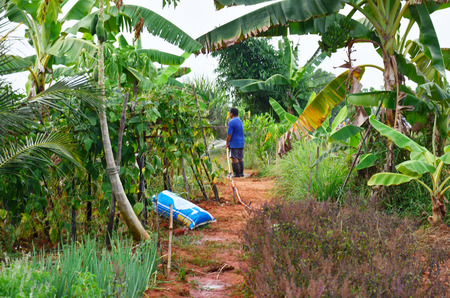 agriculturist: Agriculturist at Fruit and vegetable garden in Phatthalung Province Thailand