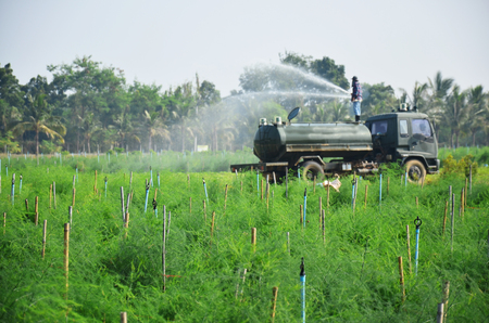 Agriculture at sparrowgrass field in countryside Phetchaburi Thailand photo