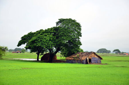 House on paddy field located in Bago, Myanmar photo