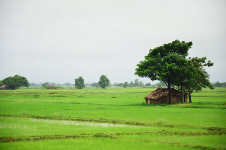 filed: House on paddy field located in Bago, Myanmar