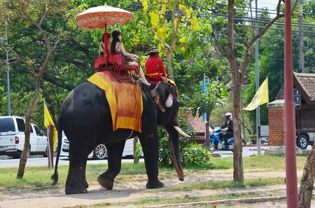foreigner: Foreigner traveller riding Thai Elephants tour around  Ayutthaya on May 21, 2011 in Ayutthaya Thailand. Editorial