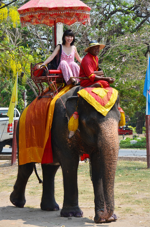 Foreigner traveller riding Thai Elephants tour around  Ayutthaya on May 21, 2011 in Ayutthaya Thailand.