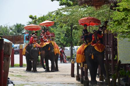 Foreigner traveller riding Thai Elephants tour around  Ayutthaya on October 5, 2014 in Ayutthaya Thailand.