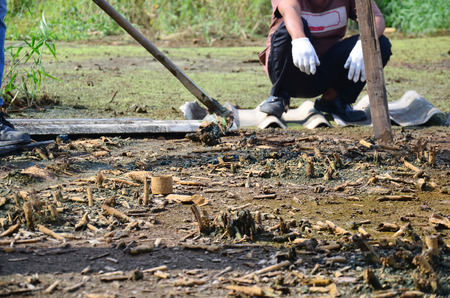 Agricultural Gardening for healing and Treatment of soil contamination from Chemicals and heavy metals in soil occur from Industrial Heavy metal release poisoning in soil from Industrial.