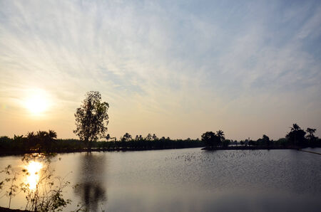 Twilight at sunset time with rice fields and Ciconiiformes Bird in Nonthaburi Thailand photo