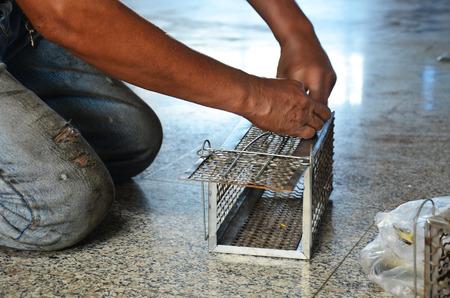 Old man use Mackerel fish for rat trap
