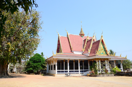 peepal tree: Ficus religiosa or sacred fig Tree in Wat Pho Sri Sa-at at Pon ngoy Village in Surin, Thailand