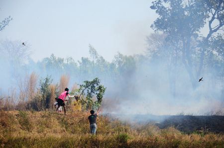 polution: Thai People use branch and leaf extinguish Smoke and flames occur from agriculturist Stubble burning rice straw for farming new rice in Surin Thailand