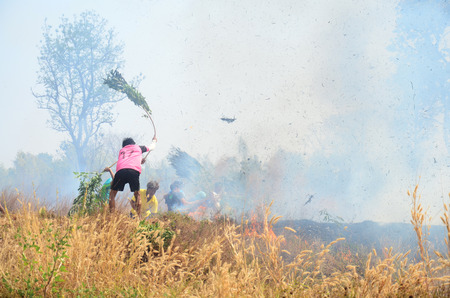 extinguish: Thai People use branch and leaf extinguish Smoke and flames occur from agriculturist Stubble burning rice straw for farming new rice in Surin Thailand
