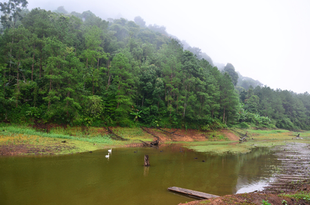 Misty and raining in Morning at Pang Ung (Pang Oong) or Pangtong2 is popular and attracts more visitors to come at Mae Hong Son, Thailand. photo