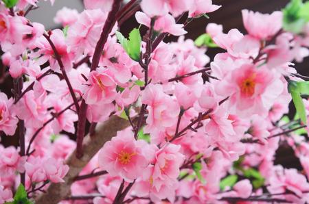 richly: Richly blossoming cherry tree sakura flower Stock Photo