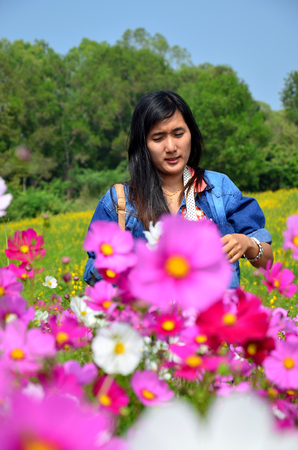 jim: People travel and portrait in Cosmos Flowers Field of Jim Thompson Farm at Countryside in Nakhon Ratchasima, Thailand Stock Photo