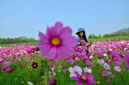 jim: People travel and portrait in Cosmos Flowers Field of Jim Thompson Farm at Countryside in Nakhon Ratchasima, Thailand Editorial