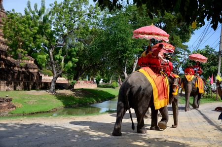 ancient elephant: Traveler riding elephant for tour around Ayutthaya ancient city on December 7, 2015 in Ayutthaya, Thailand Editorial