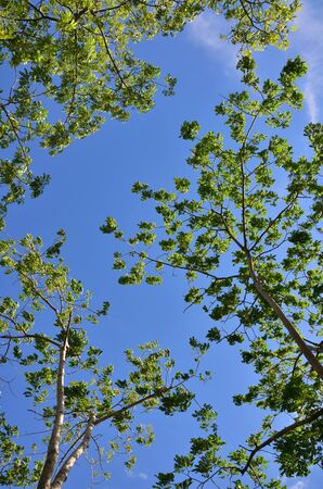 summer trees: High angle view of sky and tree