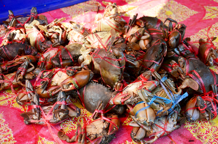 serrated: Serrated mud crab, Mangrove crab, Black crab, Giant mud crabfor sale at seafood market