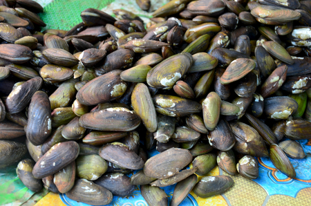 bivalve: Bivalve or mussel shell for sale at seafood market