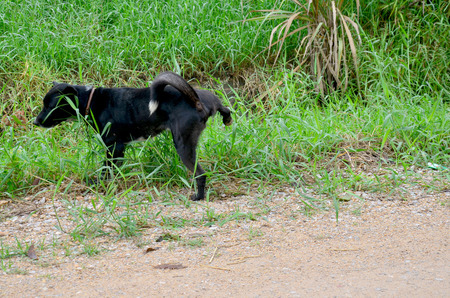 pis: Tailandesa pee perro negro al aire libre