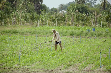 30 year old: Old man 60 year old use hoe digging land for plantation at garden in morning time on April 30, 2016 in Phatthalung, Thailand. Editorial