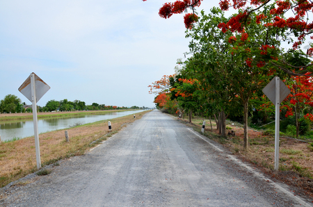 watercourse: Red delonix regia tree or Royal Poinciana  plant at beside Crushed stone road near canal watercourse waterway of water supply in countryside Nonthaburi, Thailand Stock Photo