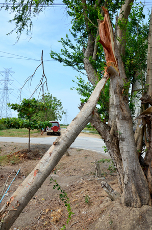 watercourse: Big tree broken from wind storm at outdoor near canal watercourse waterway of water supply in countryside Nonthaburi, Thailand Stock Photo