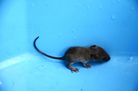 newborn rat: Baby rat or mouse in plastic case