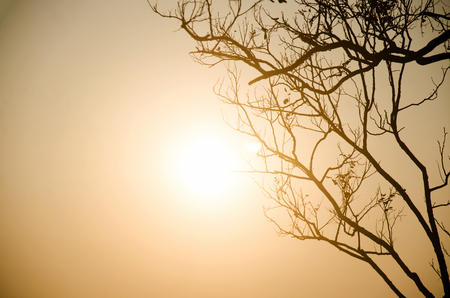 lonelyness: Silhouette of tree with sunrise at phu tok mountain at Chiang Khan in Loei, Thailand Stock Photo