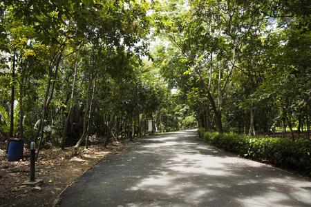 Sri Nakhon Khuean Khan Park 및 Botanical Garden 또는 Samut Prakan, Thailand의 정원에서 걷기 및 자전거 타기 자전거를 타는 여행자를위한 khang bang kachao park 스톡 콘텐츠