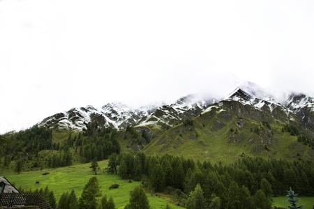 Alpine tree forest on the mountain with Alps highest and most extensive mountain range in Samnaun a high Alpine village at Graubunden region of Switzerland