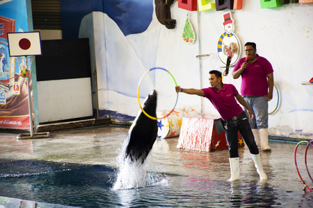 Thai people and foreigner travelers walking visit and travel looking Harbor seal show at park on September 18, 2018 in Bangkok, Thailand 写真素材 - 110720819