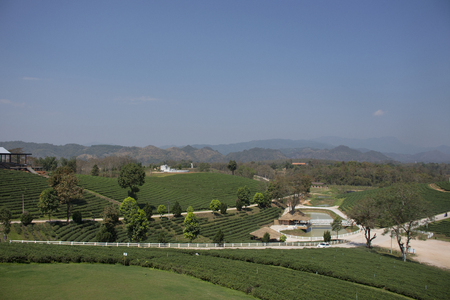 View landscape of Choui Fong Tea plantations area of over 1,000 rais in Doi Mae Salong high Mountain in Maechan of Chiang Rai, Thailand for thai people and foreign travelers visit travel and shopping
