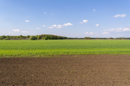 Freshly sown field with young sprouts of crops. Imagens