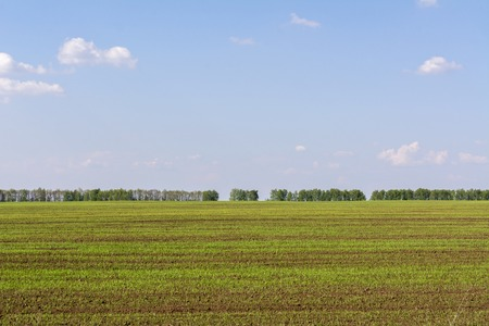 Freshly sown field with young sprouts of crops